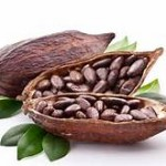 cocao bean